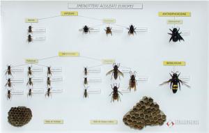 Teca entomologica